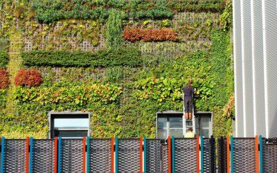 Jardines verticales, qué son y cómo incluirlos en tu oficina